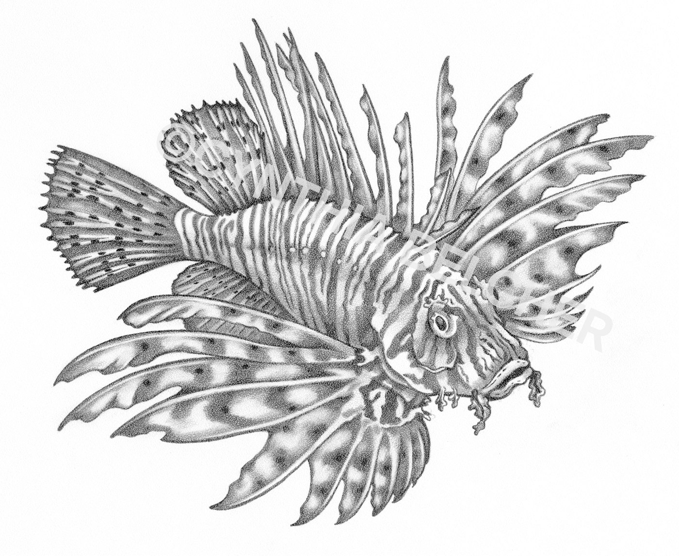 Pencil Sketches Of Fish Fish Pencil