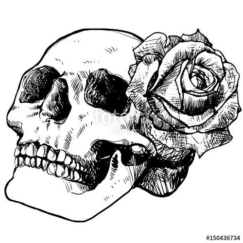 sketch of a skull with a rose