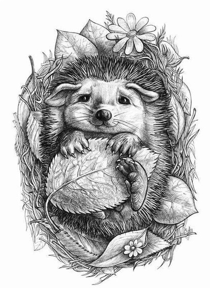 "sketch for tattoo ""hedgehog"""