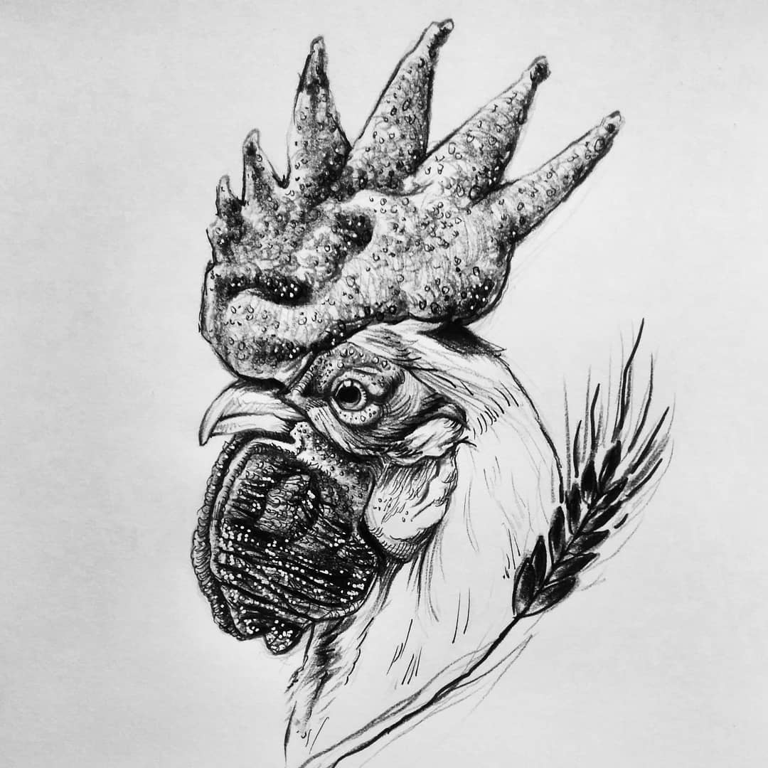 Sketch - the cock