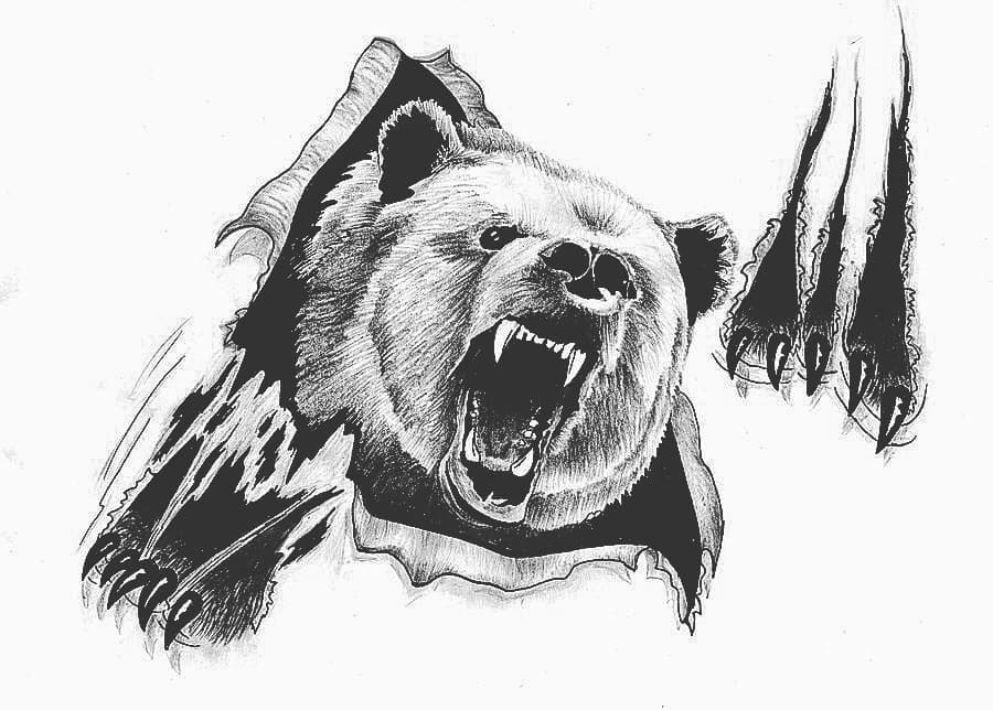 Pencil drawings of a bear