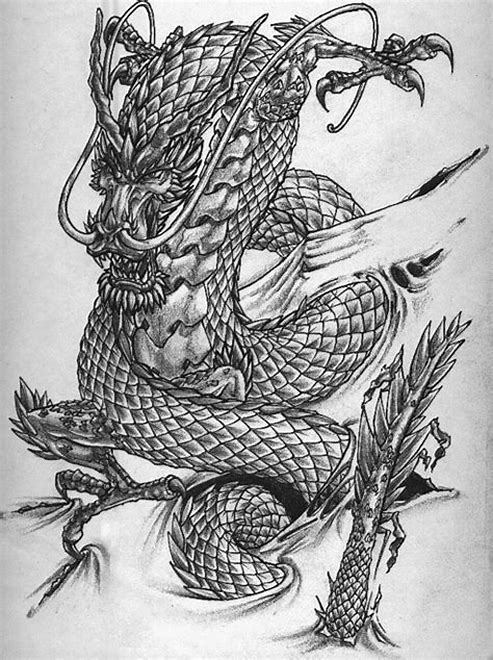 dragon tattoo sketch