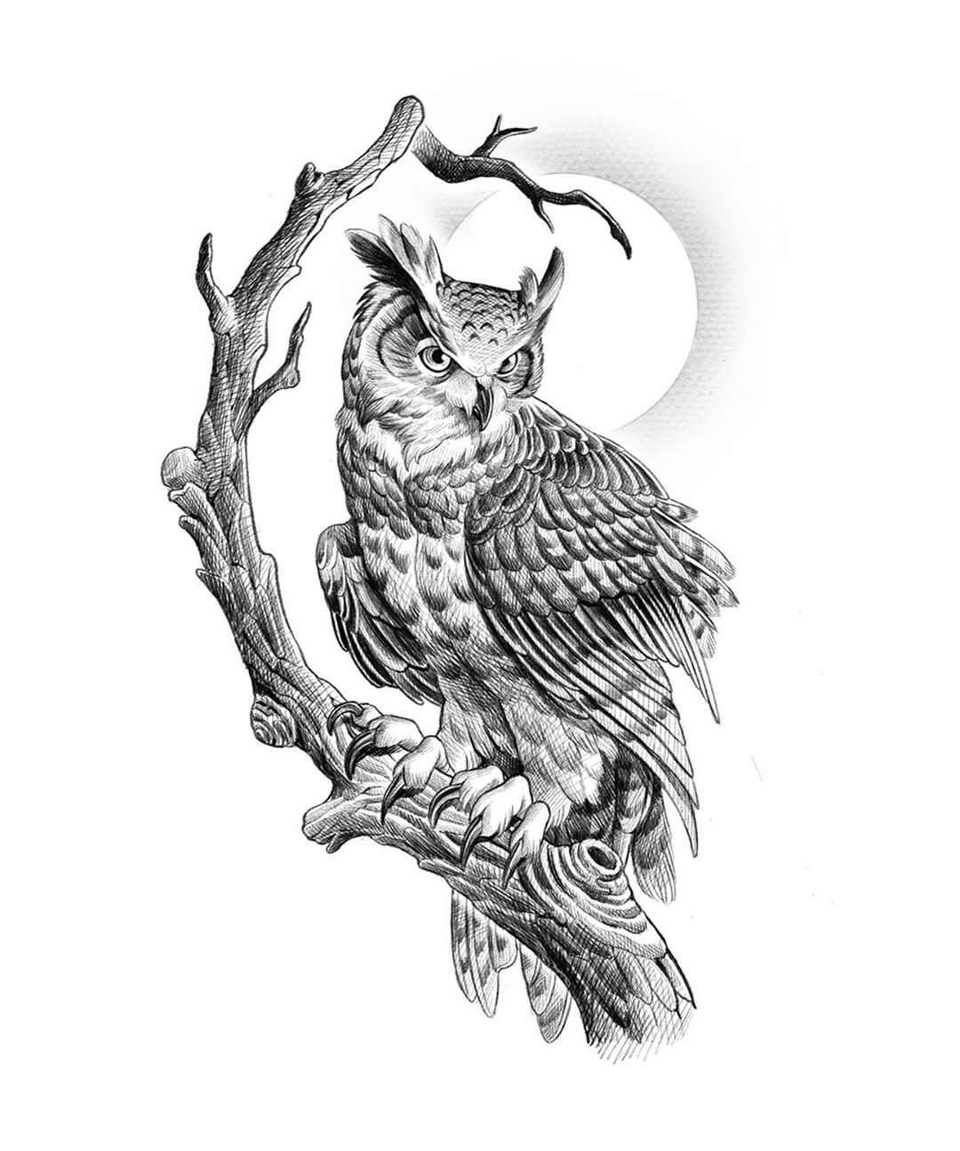 sketch of owl for tattoo